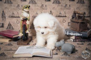 puppis-44fls