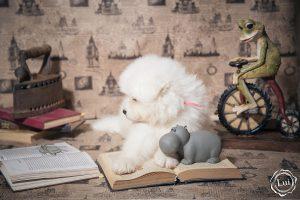 puppis-54fls